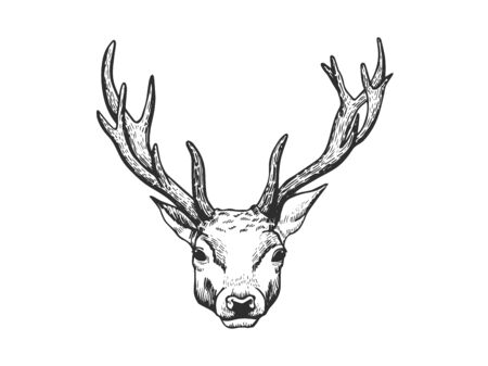 Hand drawn stag face isolated on white background.