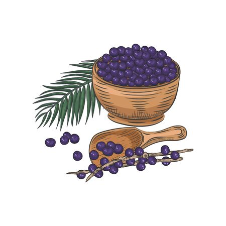 Acai berries in bowl and spoon. Still life with acai leaves and branches. Vector Illustratie
