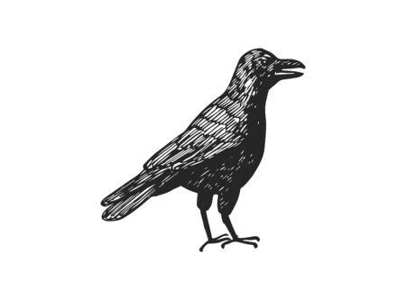 Hand drawn bird vector illustration. Illustration