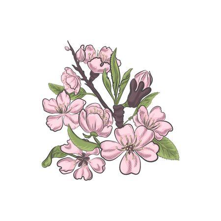 Frühlingsblühende Nahaufnahmevektorskizze. Vektorgrafik