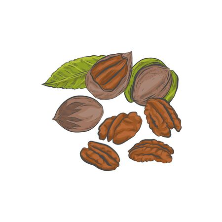 Pecan nuts in shell isolated on white background.