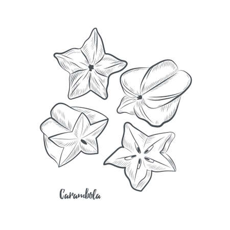 Carambola fruit sketch vector illustration. Hand drawn starfruit isolated on white background. 일러스트