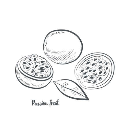 Passion fruit sketch vector illustration. Hand drawn passion fruit isolated on white background.