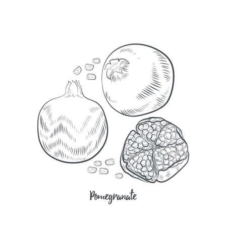 Pomegranate fruit sketch vector illustration. Hand drawn pomegranate isolated on white background. 일러스트