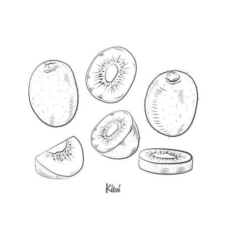 Kiwifruit sketch vector illustration. Hand drawn kiwi isolated on white background.
