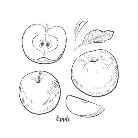 Apple fruit sketch vector illustration. Hand drawn apple isolated on white background. 일러스트