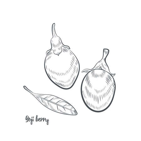 Goji berry sketch vector illustration. Hand drawn goji berries isolated on white background.