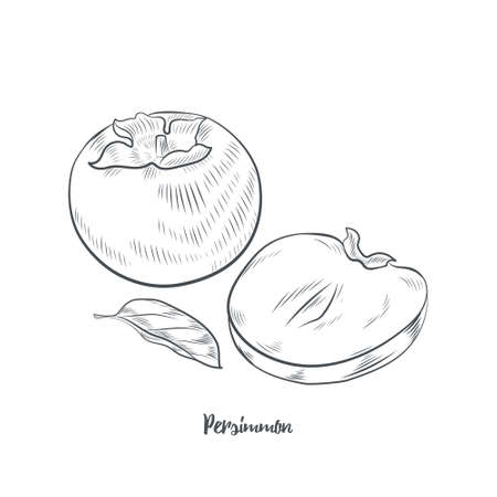 Persimmon fruit sketch vector illustration. Hand drawn persimmon isolated on white background.
