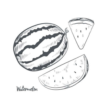 Watermelon fruit sketch vector illustration. Hand drawn watermelon isolated on white background.