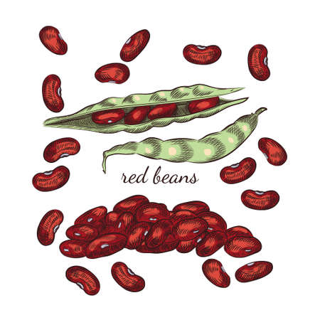 Red beans hand drawn sketch on white background. Beans and pods illustration for your design. 일러스트