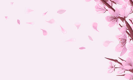 Cherry blossom branch with fallen petals pink vector background. Spring asian background with blooming sakura.