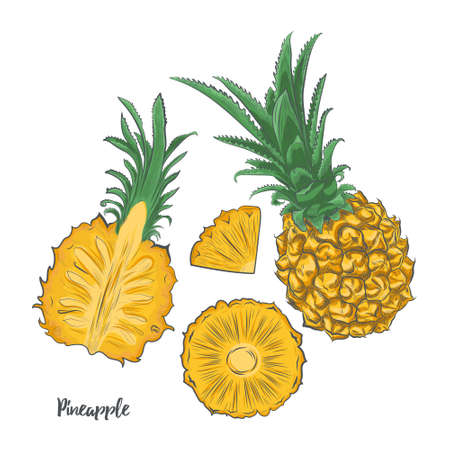Baby pineapple fruit sketch vector illustration. Hand drawn pineapple isolated on white background.