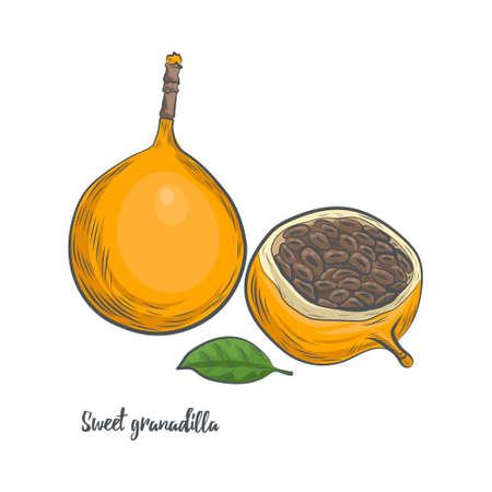 Sweet granadilla fruit sketch vector illustration. Hand drawn passiflora fruit isolated on white background. 일러스트