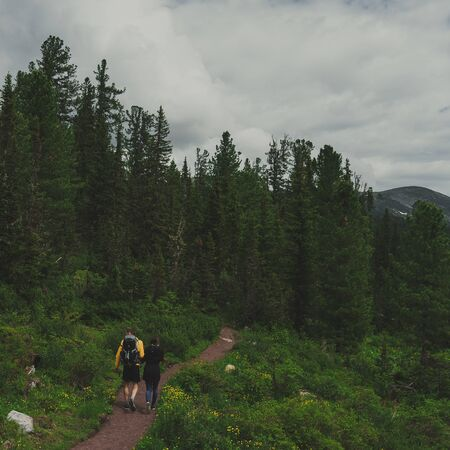 wooded path: travelers going along the path towards the mountains wooded