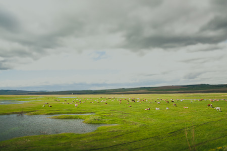 the arable land: cultivated field in ominous weather in Siberia