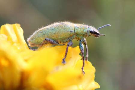 arthropoda: green insect; family arthropoda Stock Photo