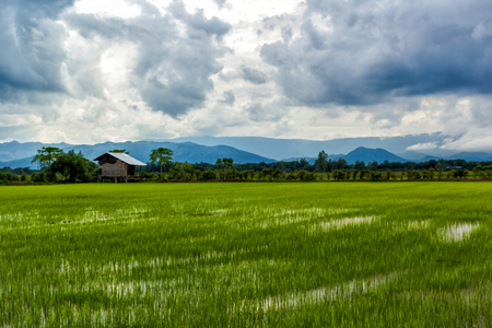 Rice field with little hut on dark cloudy and mountain background Stock Photo