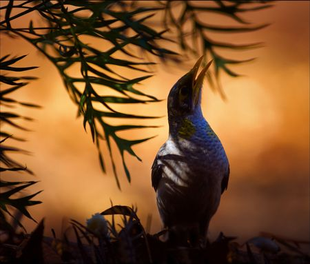 Silhouette of a bird to a burning branch lit up by a rising sun. Stock Photo - 7745013