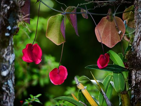 allocated: Red flowers on green foliage. Brightly red flowers are allocated against juicy tropical greens.