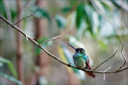 bird watching: The hummingbird sits on a branch against pastel color stains.