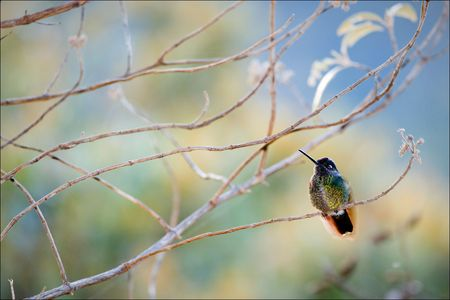 The hummingbird sits on a branch on a colourful background of color stains of foliage. Stock Photo - 7756909