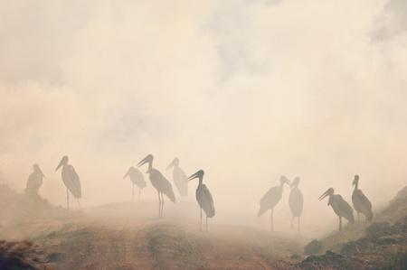 Marabou stork in the smog. Fire in savanna photo