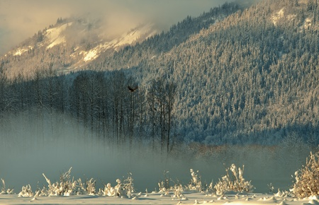 The Chilkat Valley under a covering of snow, with mountains behind. Southeast Alaska. photo