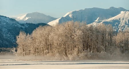 Bald Eagles on the ground and on snow covered branches. Chilkat. Haines. Alaska photo