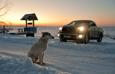 The dog waits at road. The dog waits at snow-covered road near to a well and truck.