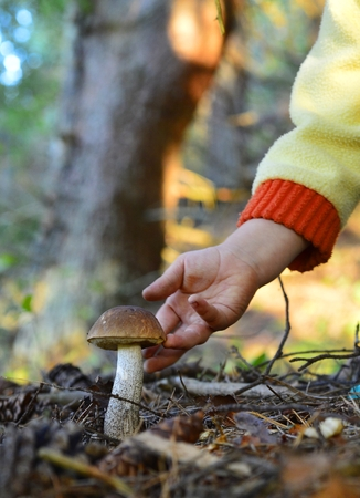 Little hand  gathers mushrooms in the forest on summer day photo