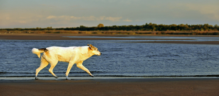 bounding: The dog running on the coast of the lake