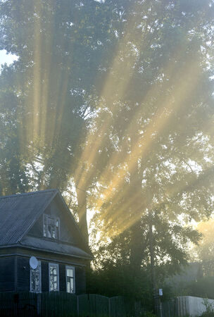 the suns rays passing through the foliage of the tree photo