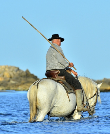 PROVENCE FRANCE 09 MAY 2015: Raider and White Camargue horse on water of the sea. France.Parc Regional de Camargue Provence France photo
