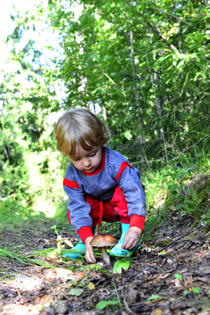 gathers: Little girl gathers mushrooms in the forest on summer day