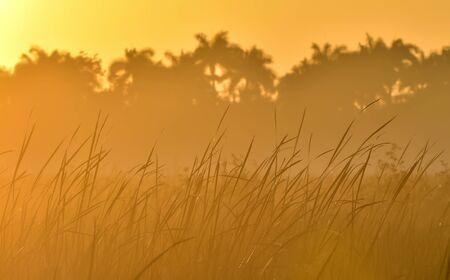 colorful sunrise: Palms and plants in tropic on sunrise. Zapata. Cuba Stock Photo