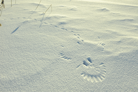 coldly: Trace of flied up magpie  bird on snow look as a portrait of smile of  ghost. Stock Photo