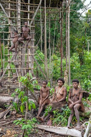 Nuova Guinea: ONNI VILLAGE, NEW GUINEA, INDONESIA - JUNY 24: Korowai tribe people at a ladder to the Traditional Koroway house perched in a tree above the ground, Western Papua, former Irian-jaya, Indonesia