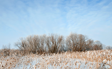 Sunny day winter landscape