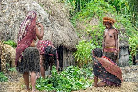 BALIEM VALLEY, WEST PAPUA, INDONESIA, JUNE 4, 2016: Dugum Dani tribe village. Women of Dugum Dani tribe cooks food and uses an earth oven method of cooking pig.  West Papua. New Guinea Island