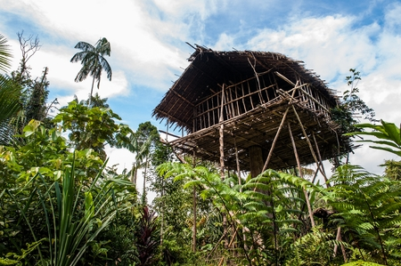 Traditional Koroway house perched in a tree above the ground. Korowai Treetop House Deep Inside the Forest. Papua, Indonesia Archivio Fotografico - 100548546