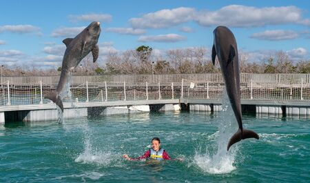 Jumping dolphins. Woman  swimming with dolphins in blue water. Foto de archivo