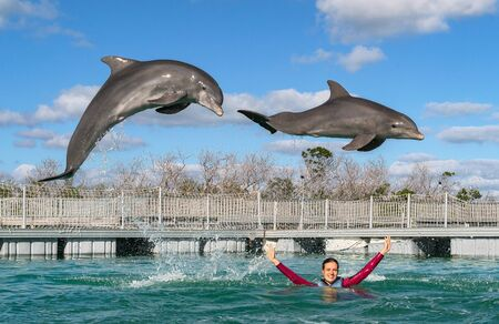 Jumping dolphins. Woman  swimming with dolphins in blue water. 写真素材