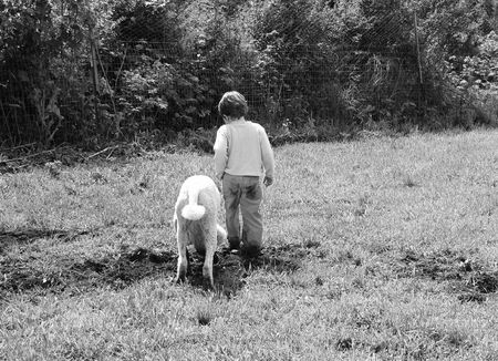 Boy and dog in the field Stock Photo