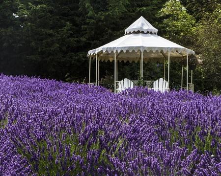 Lavender Farm with Gazebo