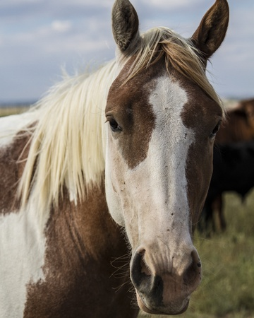 Horse with white and brown markings Stock Photo