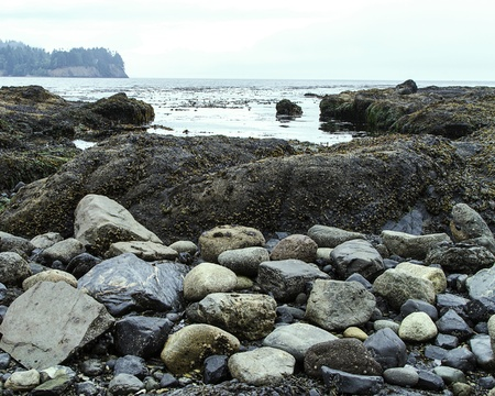 Rocks in Washington State coastal tidal pool Stock Photo - 15626719