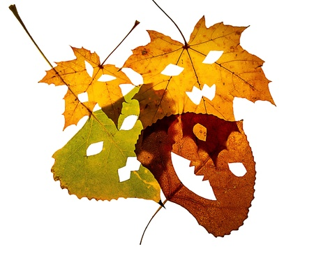 Four Jack-O-Lantern cut out leaves lay overlapping on a white background.
