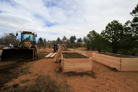 Raised garden beds are being prepared by team of people and bull dozer. Stock Photo