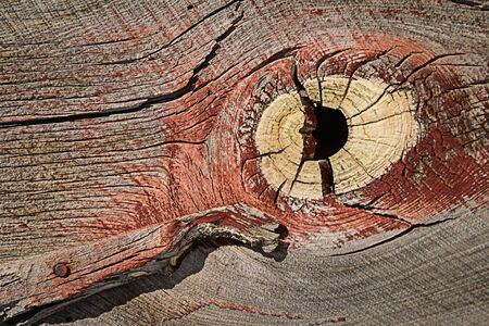 Weathered barn wood shows worn red paint and large knot hole in grain plus  wooden hings with bolts.