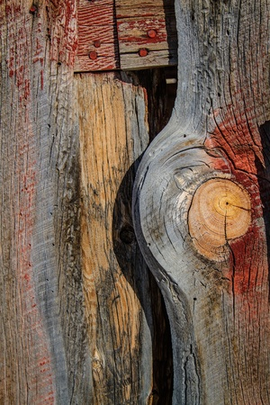 barnwood: Madera resistida granero muestra desgastada pintura roja y el agujero nudo grande con grano m�s viejas u�as rojas.